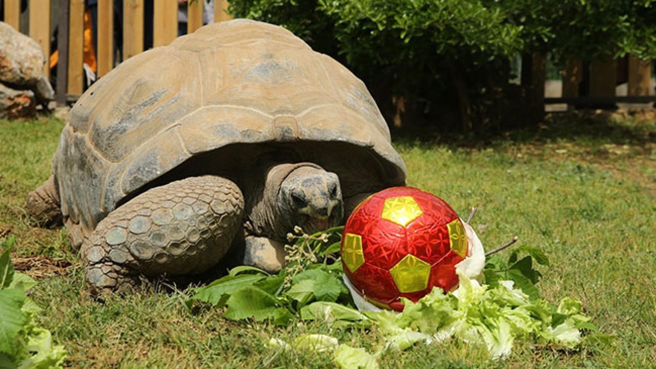 """Kaplumbağa """"Tuki"""" 99 yaşında"""