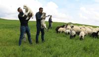 Mühendis kardeşler baba mesleği çobanlıktan vazgeçmiyor