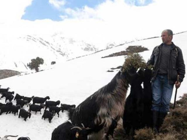Göksunda çobanların zorlu yolculuğu