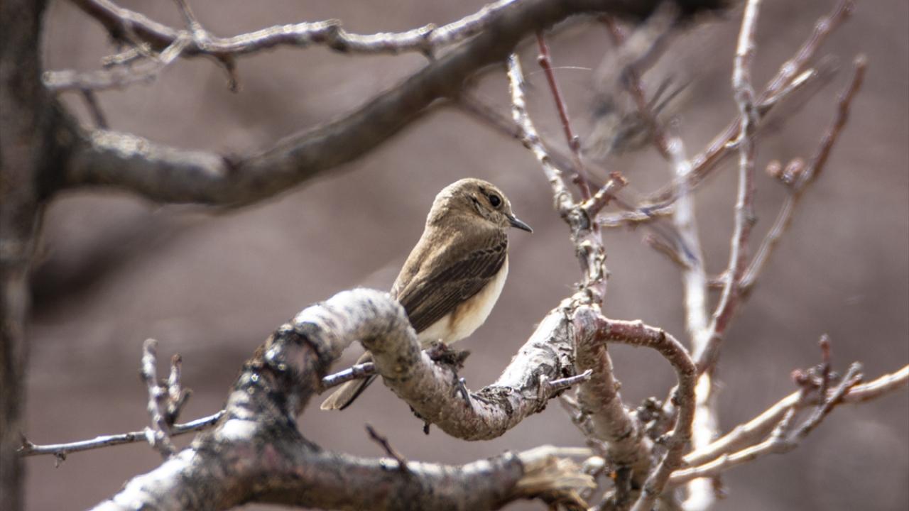 """""""Doğunun Çukurovası"""" kuşlarla cıvıl cıvıl"""