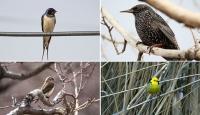 Cıvıl cıvıl kuşlarıyla Iğdır kuş bilimcilerinin ilgisini çekiyor