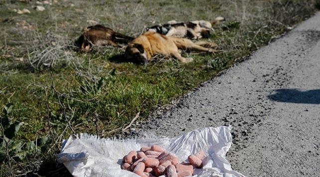 Ankarada boş arazide köpek ölüleri bulundu