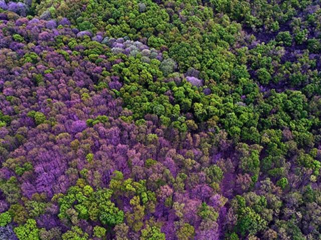Binbir rengiyle Longoz ormanları