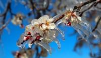 Meteorolojiden çiftçilere 'zirai don' uyarısı