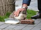 Her gün beslediği sokak hayvanlarına çocukları gibi bakıyor