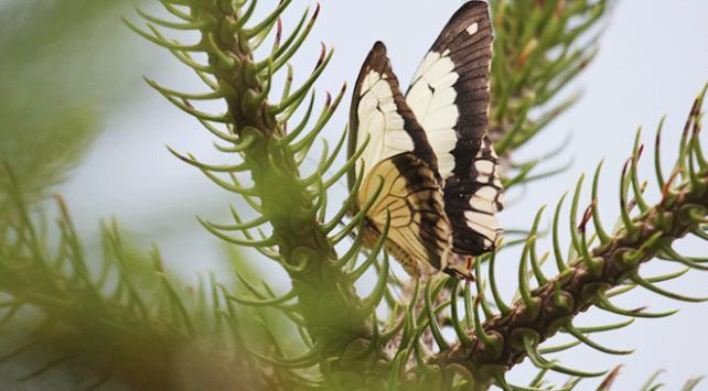 """Gaziantepte """"Tropik Kelebek Bahçesi"""" ziyarete açıldı"""