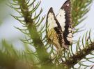 Gaziantep'te Tropik Kelebek Bahçesi ziyarete açıldı