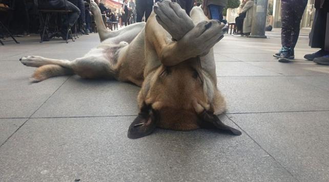 Hareketleriyle ilgi gören sevimli köpek