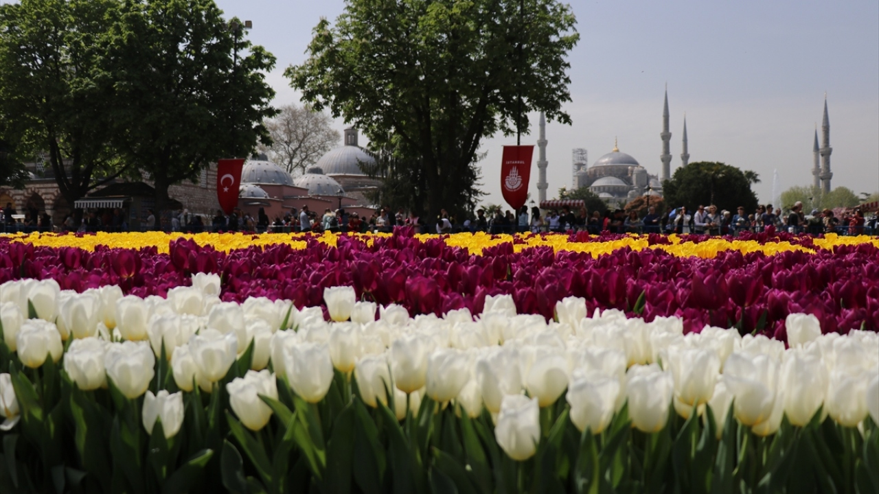 """Sultanahmette dünyanın en büyük """"lale halısı"""""""