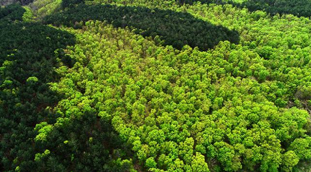 2018'de 12 milyon hektar ormanlık alan yok oldu