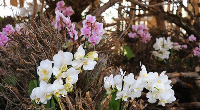 Burdur'da Tayvan orkideleri bahçesi açıldı
