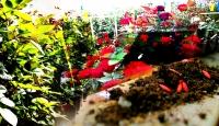 Evini ve bahçesini renklendirmek isteyenler için bahçe bakımı