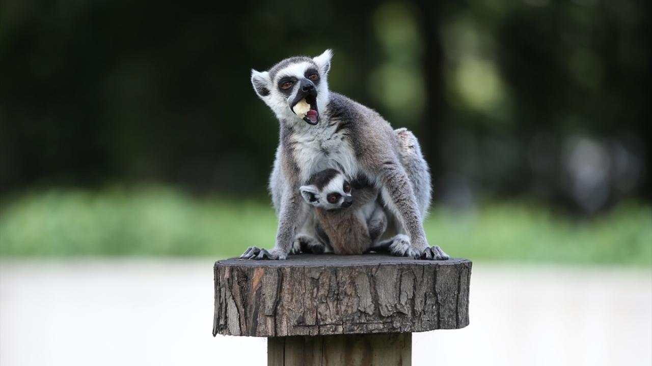 Bursa Hayvanat Bahçesinde yavru heyecanı