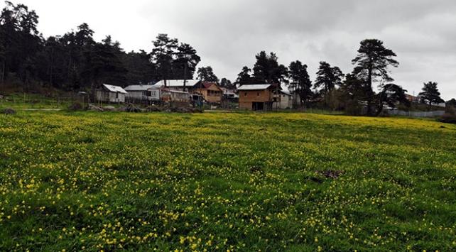 Bolu yaylalarında iki mevsim bir arada