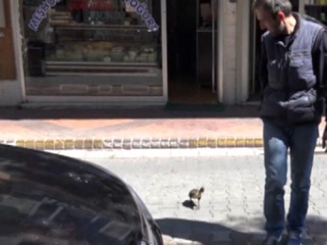 """Yavru ördek """"Paytak"""" sahibinin peşinden ayrılmıyor"""