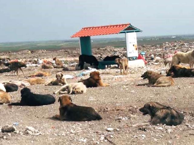 Lüleburgazdaki yüzlerce köpek için beslenme noktaları kuruldu
