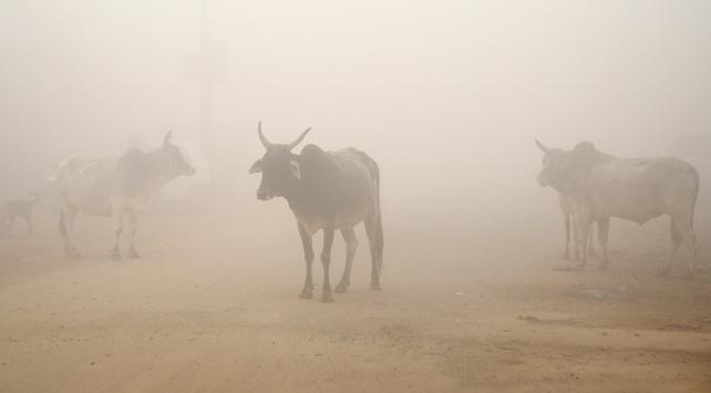 Cammu Keşmirde inek kaçakçılığı yaptığı iddia edilen Müslüman öldürüldü