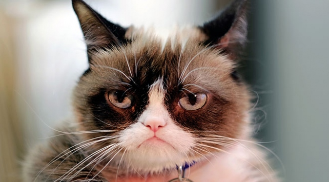 Sosyal medya fenomeni huysuz kedi (Grumpy Cat) öldü
