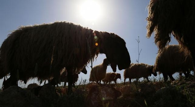 Göçerlerin ramazanda zorlu yolculuğu ile ilgili görsel sonucu