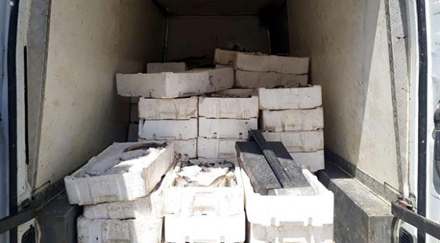 Kaçak balık avlayan şüphelilere 15 bin lira ceza