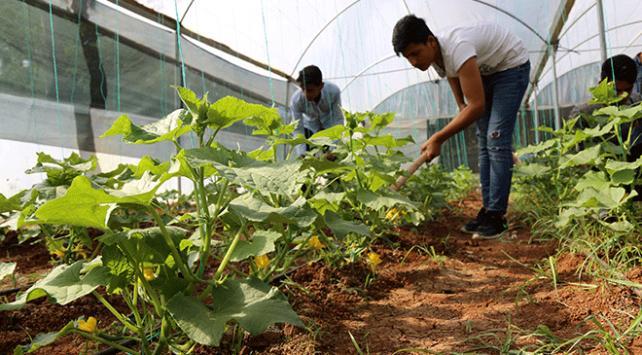 Yabancı öğrenciler Şanlıurfadaki lisede tarım öğrenecek