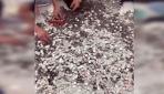 Çinde bir kişi aldığı arabanın ödemesini bozuk parayla yaptı