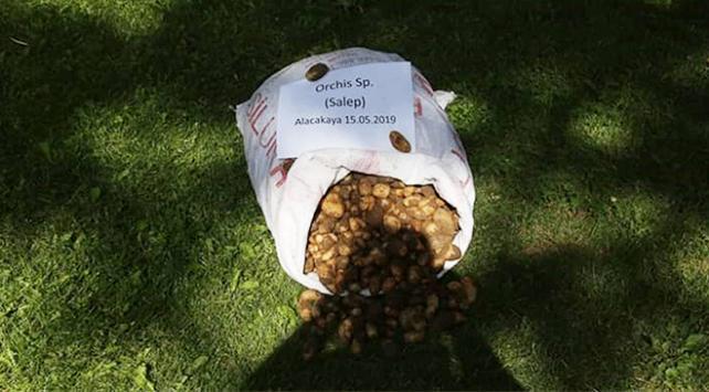 Koruma altındaki salep soğanlarını toplayan 5 kişiye 300 bin lira ceza