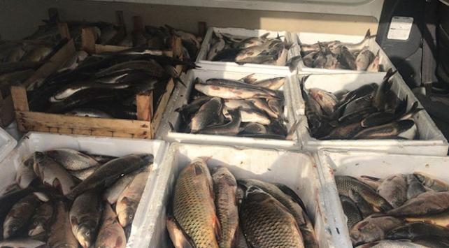 Kaçak avlanan 1,2 ton balık imha edildi