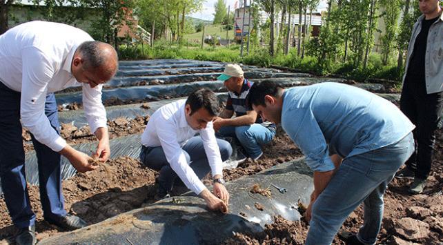 Yeşilyurtta çilek üretimi artırılacak