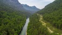 Eşsiz flora ve faunasıyla sığla ormanları