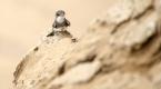 Kum tepeleri kırlangıçların yuvası oldu