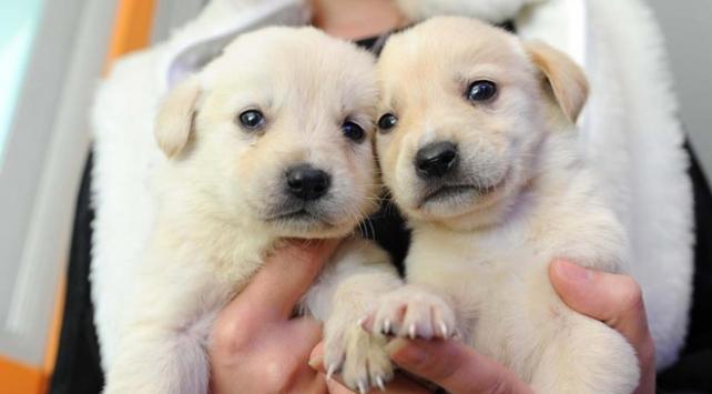 Petshoplarda iki aydan küçük hayvan satılamayacak