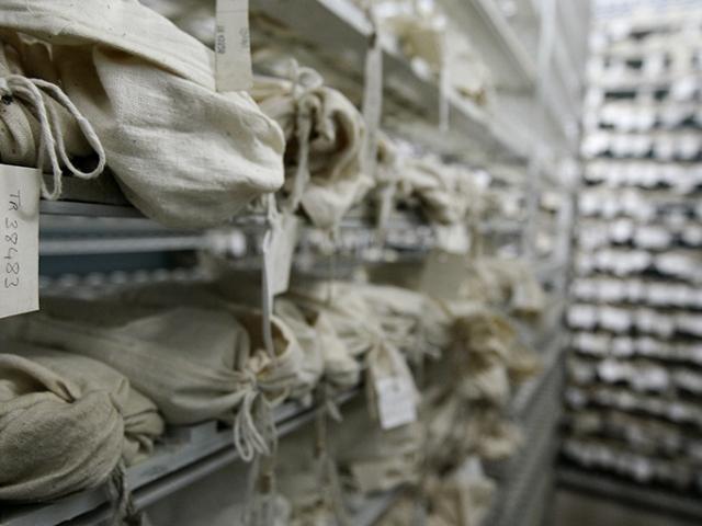 Ata yadigarı tohumlar gen bankalarında korunuyor
