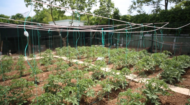 Şehirde tarıma ilgi artıyor