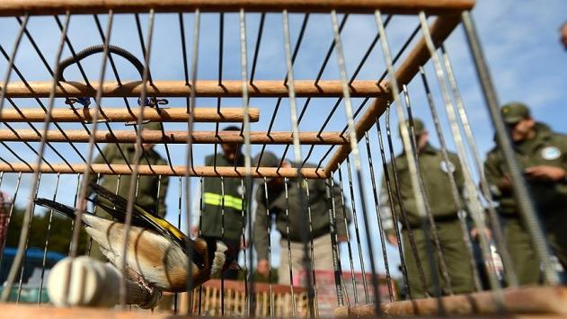 Saka kuşlarını yakalayan kişiye 7 bin 200 lira ceza