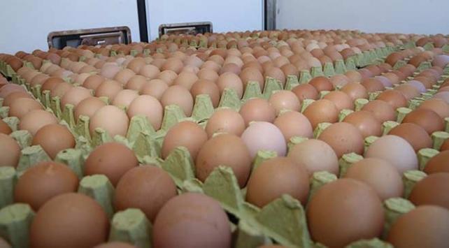 Tavuk yumurtası üretimi geçen yıla göre yüzde 2,5 arttı