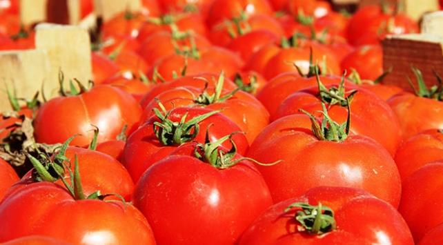 Rusyaya en çok domates ihraç edildi