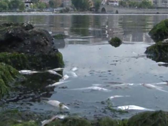 Küçükçekmece Gölünde binlerce balık kıyıya vurdu