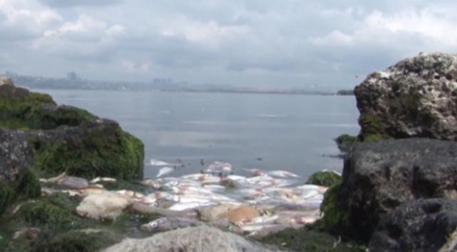 Tarım ve Orman Bakanlığından Küçükçekmece Gölündeki balık ölümleri açıklaması