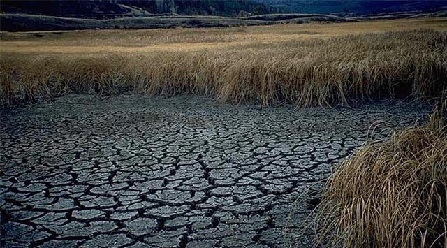 Bitkiler kuraklıkla mücadele edecek