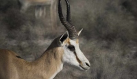 Namibya bin yabani hayvanı satışa çıkaracak