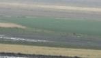 Çiftçiler yağmur yağarken tarlayı yağmurlama sistemiyle suladı