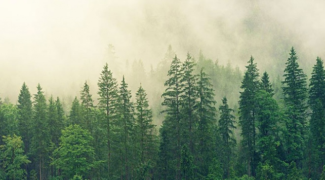 Dünya ormanları 4 milyar hektara geriledi