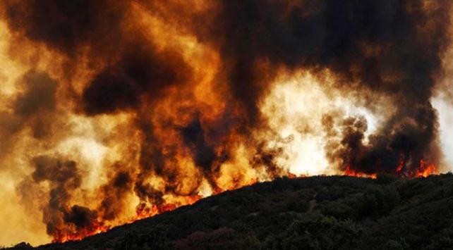 Pakistanda 2 ayda 90 orman yangını