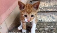 Kedisi kayboldu, itfaiye ve polisten şikayetçi oldu