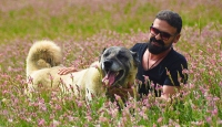 Kangal köpeklerini uluslararası festivale hazırlıyorlar
