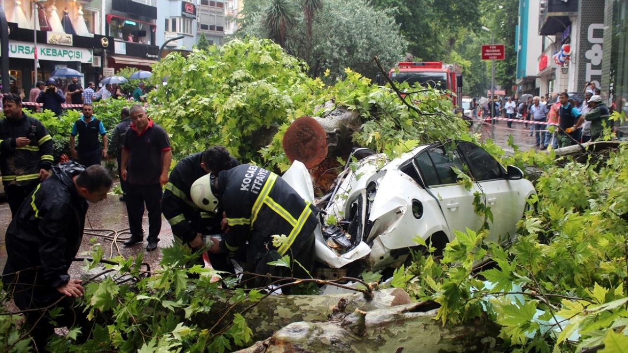 Kocaeli'de ağaç yola devrildi: 2 yaralı