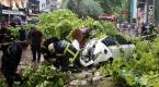 Kocaelide ağaç yola devrildi: 2 yaralı