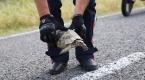 """Jandarmanın """"kaplumbağa"""" mesaisi"""