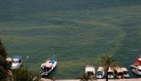 Fethiye Körfezi'nde deniz sarı ve yeşile döndü
